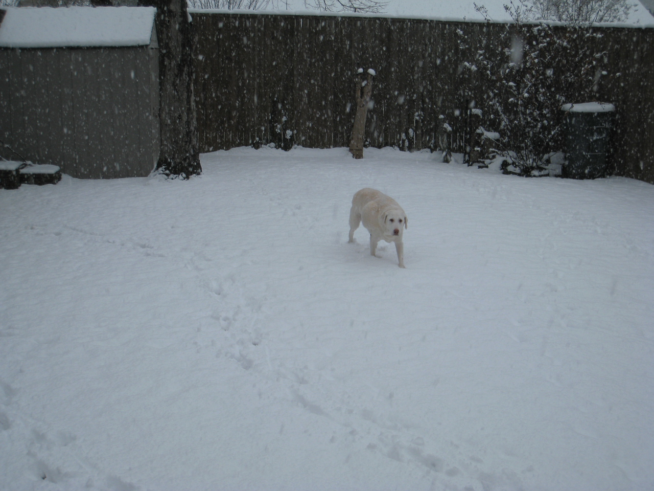 Murphy making trails in the snow.