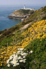 SOUTH STACK CLIFF TOP FLOWERS  #1