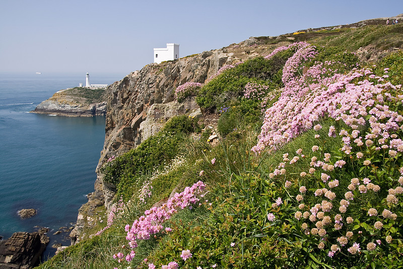 SOUTH STACK CLIFFTOP FLOWERS  #2