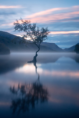 Misty Lone Tree Dawn