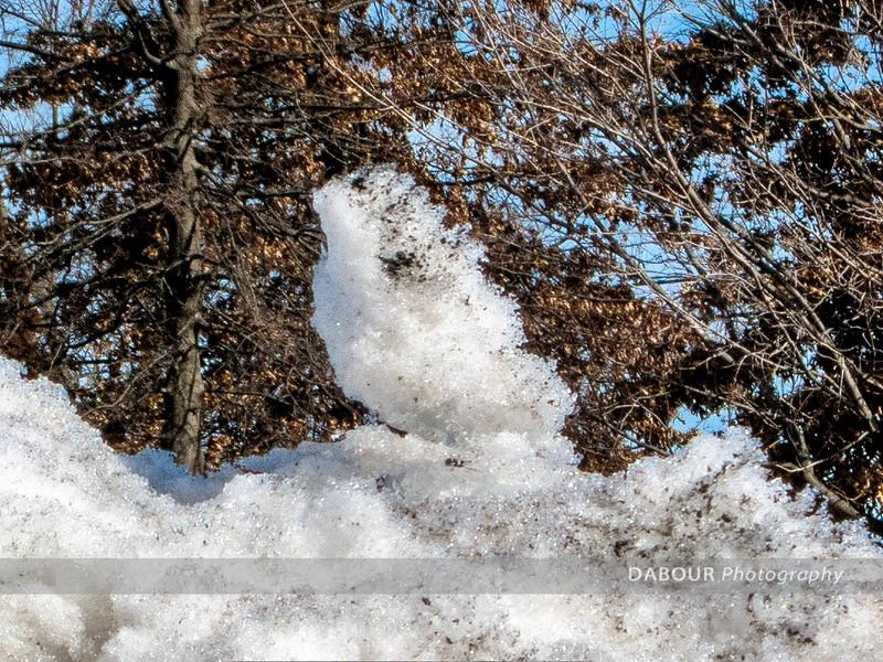 Snowscapes 2015