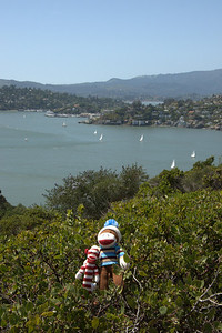 From Angel Island in San Francisco Bay, CA