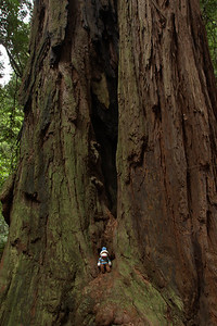 Muir Woods National Park, CA