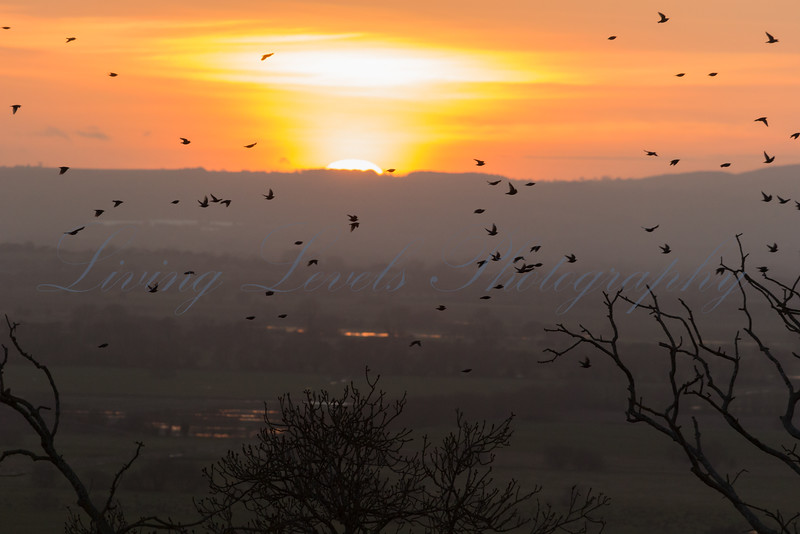 Dusk Roost