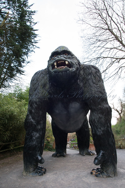 As the day comes to an end the statue of a giant gorilla at the entrance of the dinosaur park at Wookey Hole becomes more scarey