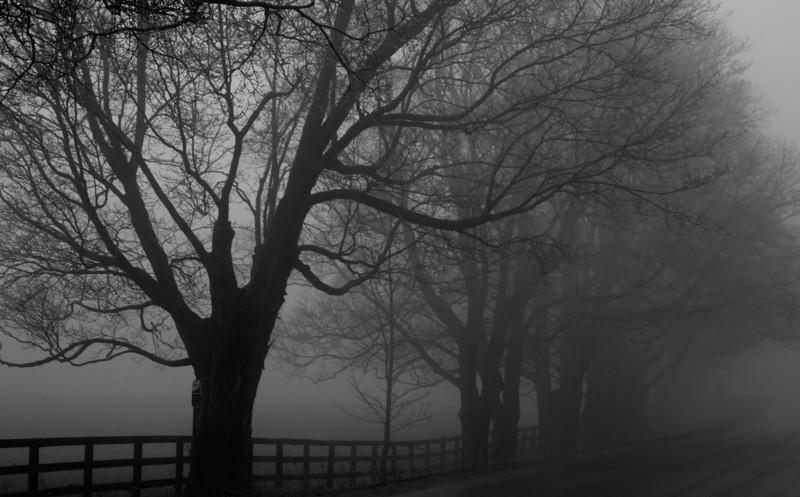 """""""Mystic Dawn"""""""