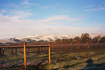 Snow outside Sonoma