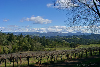 Looking toward Napa