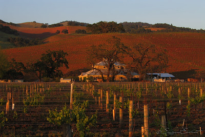 Kunde Family Estate Vineyards