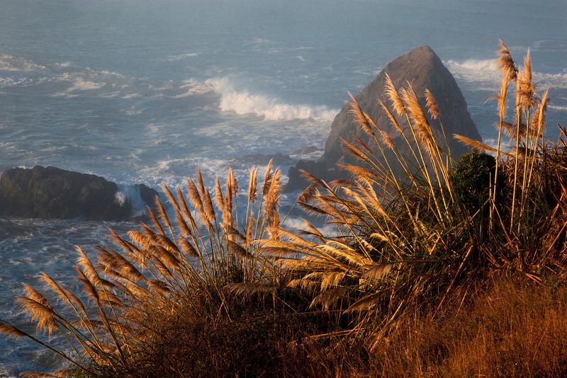 Morning light on coast