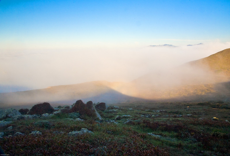 Foggy morning, Sonoma coast