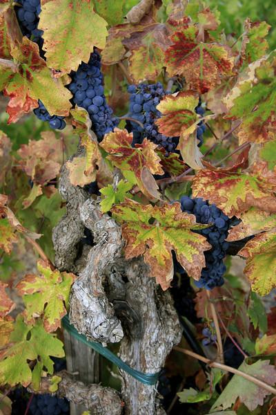 De Carlo Winery Dry Greek Road in Healdsburg CA
