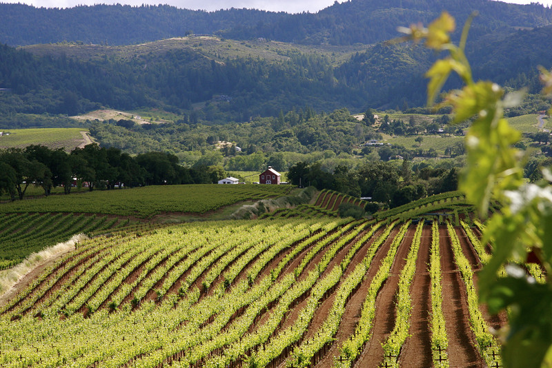 De Carlo Winery Dry Creek Road in Healdsburg CA