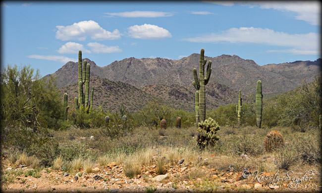Scenes from my drive home..  Scottsdale, Arizona