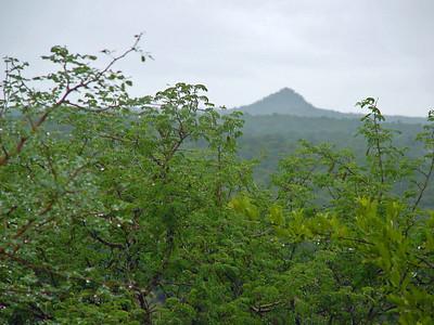 Kruger National Park after Rain Shower