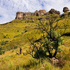 Drakensberg - Tugela Gorge, Policeman's Helmet
