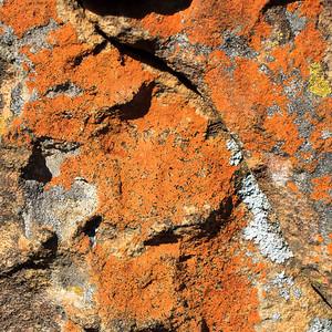 Drakensberg - Royal Natal Lichen on Rock