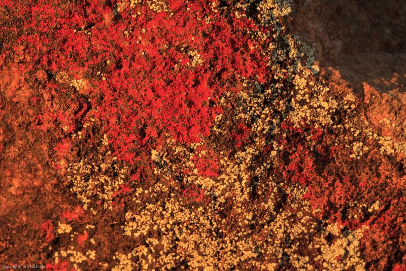 Colours in Lichen