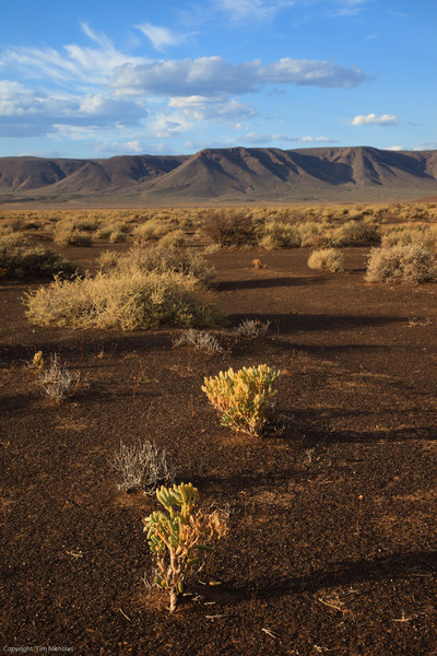 Tankwa Karoo National Park, late afternoon view towards Elandsberg