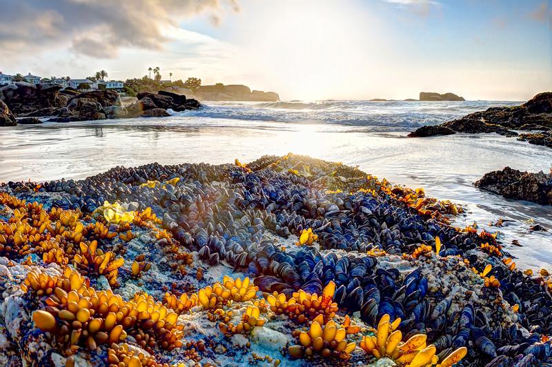 Mussels on CliftonBeach