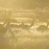 Kalahari Gemsbok NP