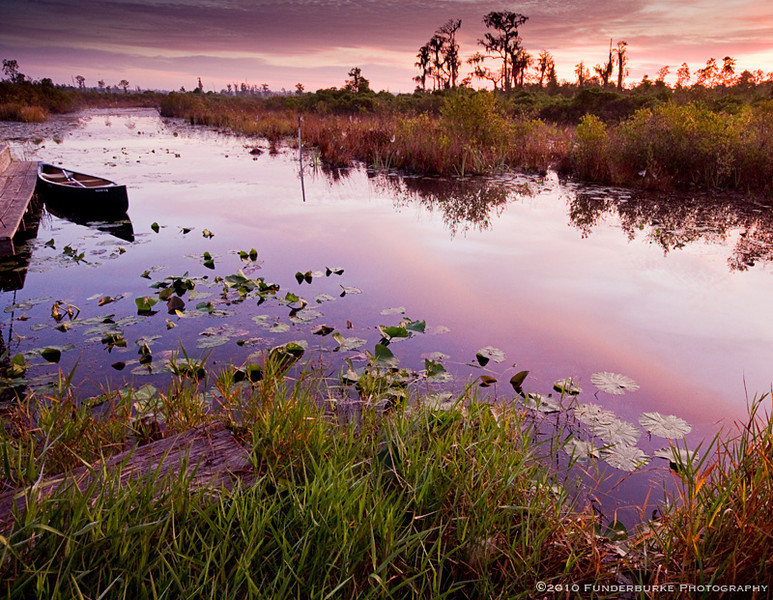 Purple Morning, Okefenokee Swamp, Georgia