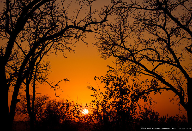 Safari Sunset II, South Africa
