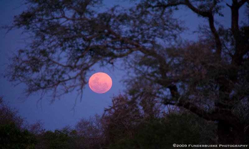Safari Moonrise, South Africa