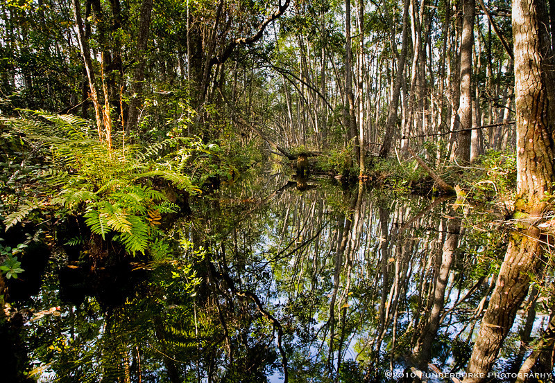 Alternate Worlds, Okefenokee Swamp, Georgia