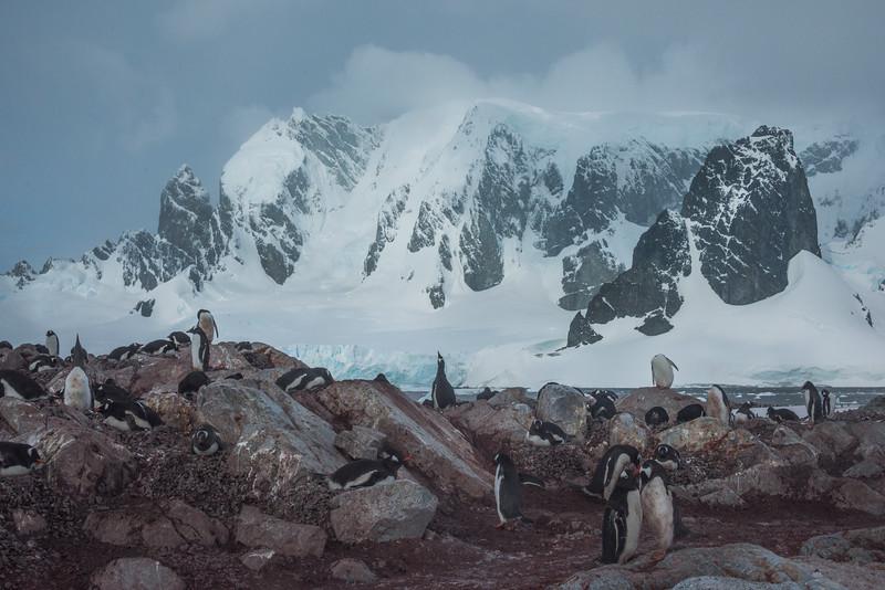 A Penguin Playground