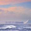 Floating Icebergs In Rough Seas