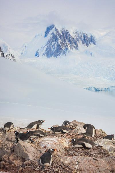 Penguin Nest And Peak