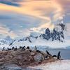 Penguin Nest Landing Below The Lentis