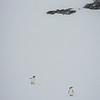 The Barren Land Of Antartica