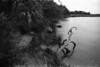 Tidal Marsh, Edisto Beach, SC