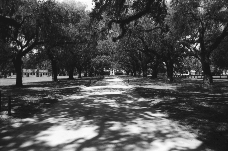 Avenue of the Oaks, Boone Hall Plantation, Mt Pleasant SC