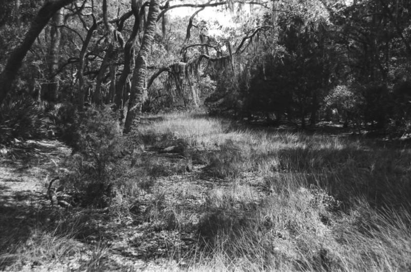 Tidal Marsh, Edisto Beach SP