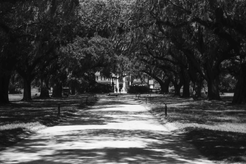 Avenue of the Oaks, Boone Hall Plantation, Mt Pleasant SC