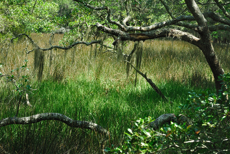 Marsh, Edisto Island SP