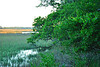 Tidal Marsh, Edisto Beach SC