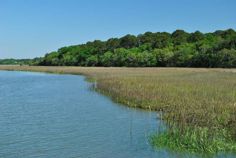 Marsh, Edisto Island SP
