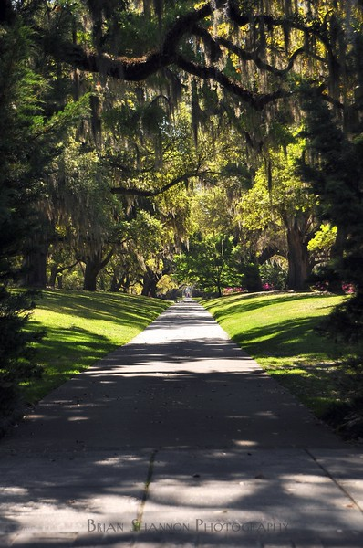 Down the garden path at Brookgreen Gardens