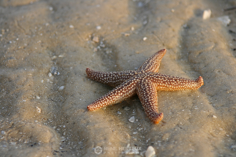 Starfish in sunrise