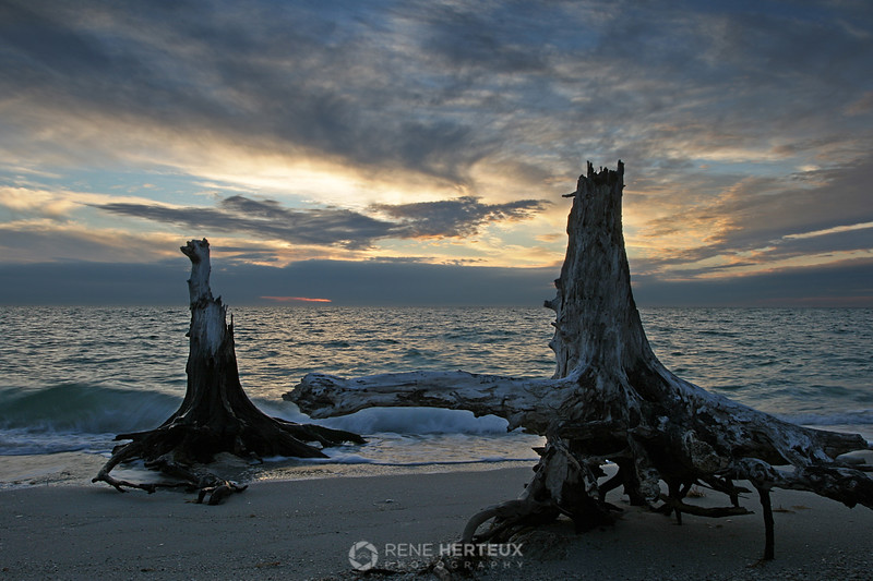 Stumps at sunset