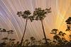 Star trails over slash pines