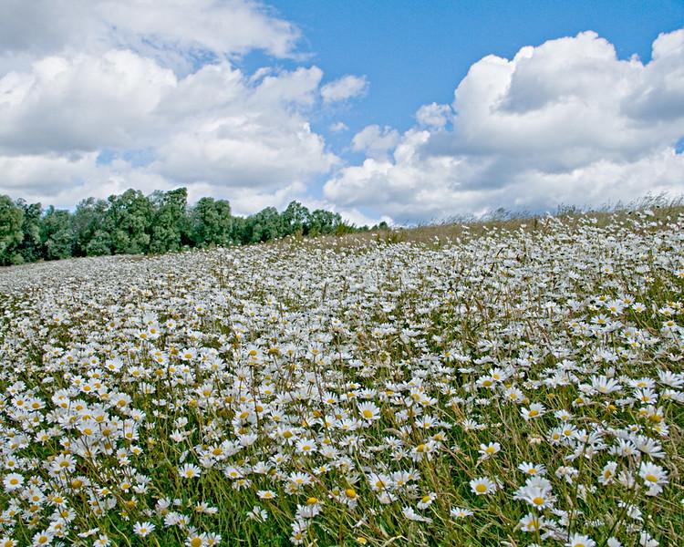A field on Whiteleas Way