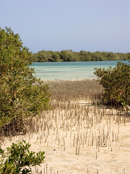 Nabq protected area, mangrove forest