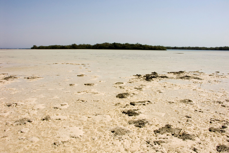 Nabq protected area, tidal flat