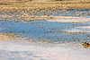 Saline lake