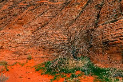 bush and sandstone
